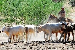 Verifican status del ganado en la zona norte de Nayarit